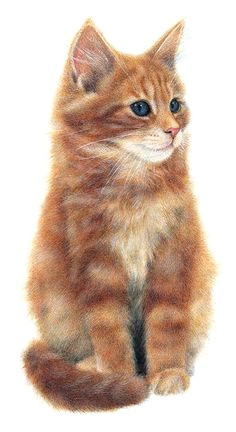 gabriella by anne mortimer beautiful cats cat lovers i love cats cute cats