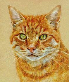 animal paintings cat drawing drawings of cats pencil drawings of animals color