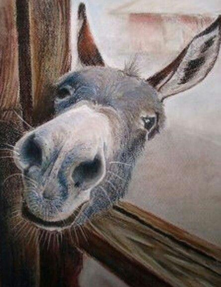 donkeys donkey funny cute donkey farm animals funny animals cute animals