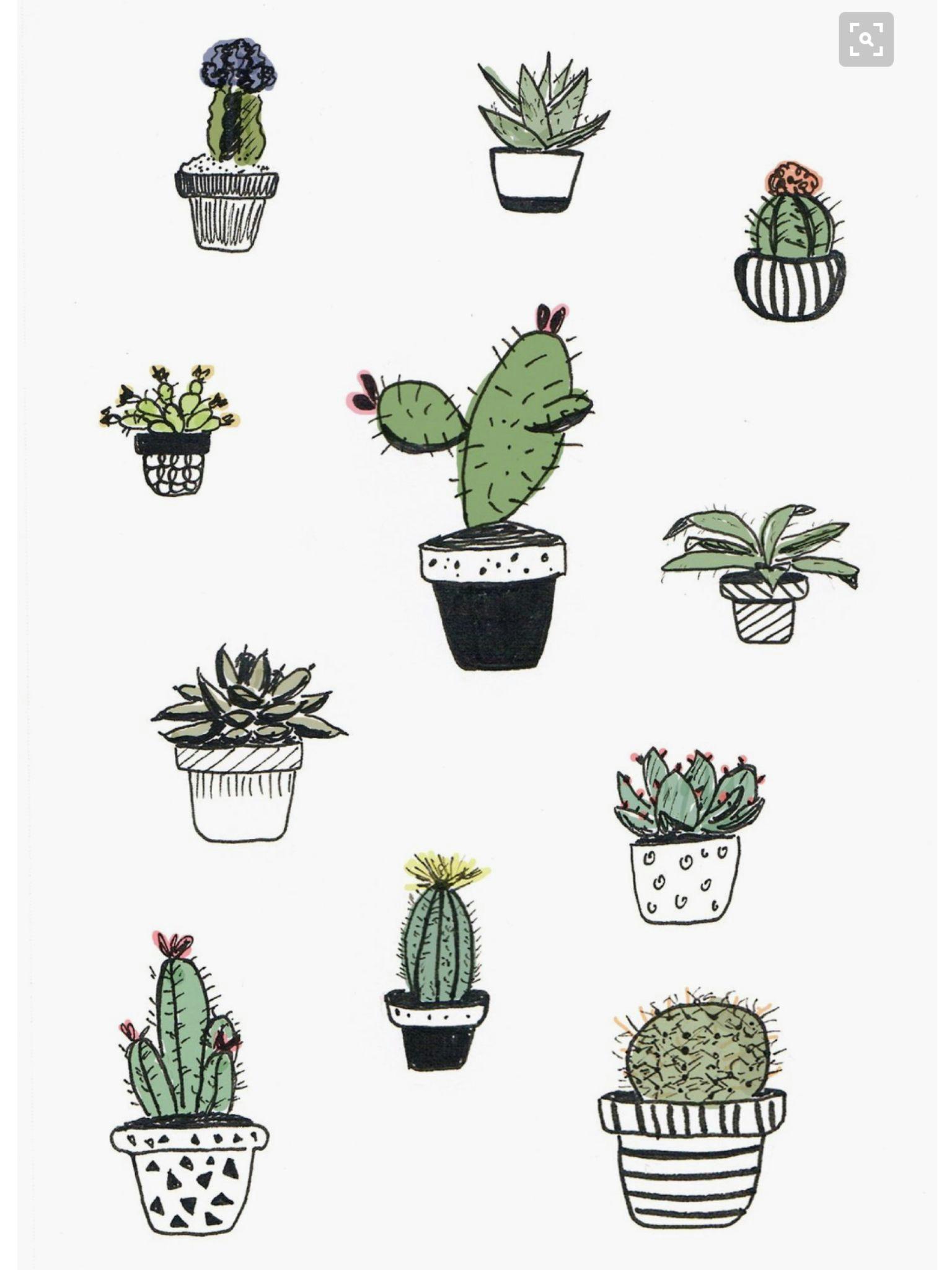 cute iphone wallpaper tumblr iphone wallpaper plants cute wallpapers cactus drawing plant