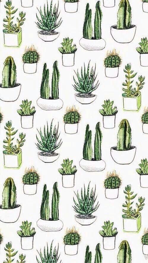 cactus succulents iphone wallpaper background lockscreen
