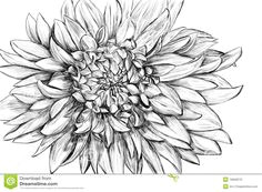 monochrome flower hand drawn illustration black and white flower