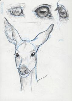 horse eyes deer face study