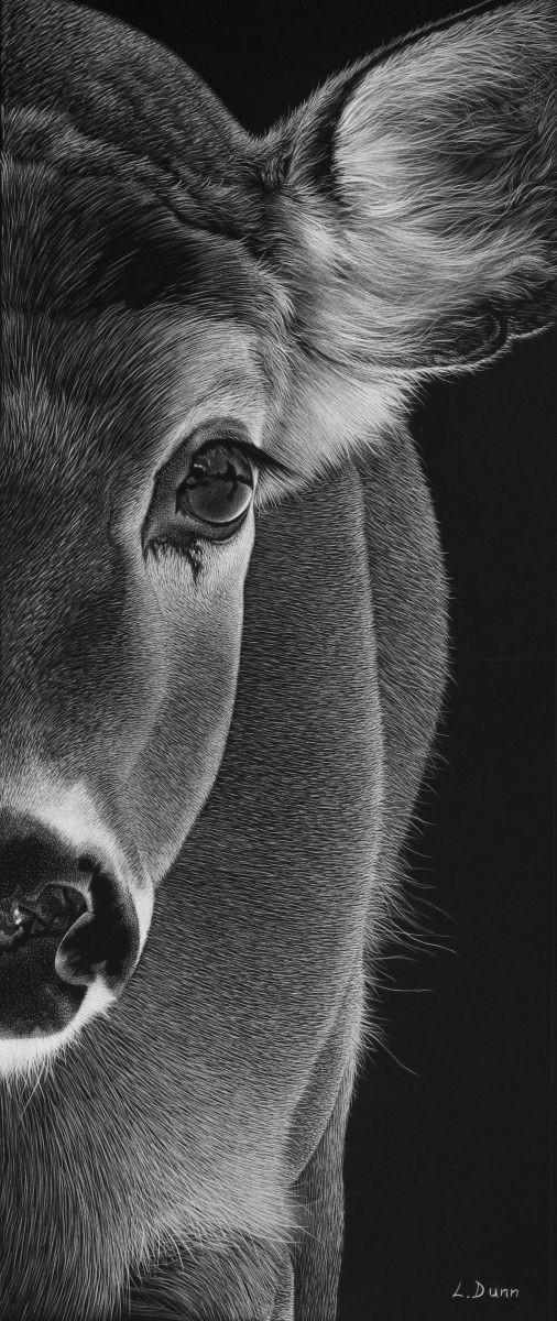 mammals more drawing pinterest scratchboard scratchboard art and pencil art