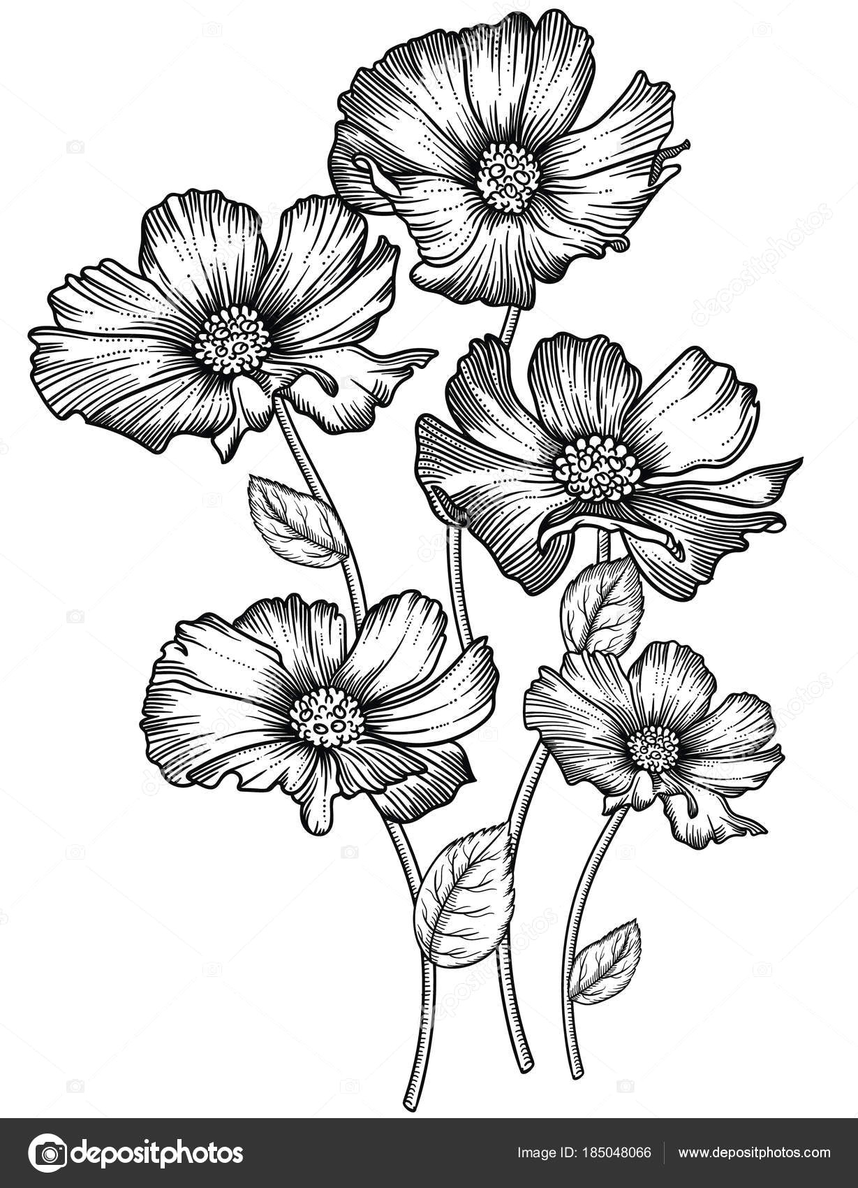 blooming forest flowers detailed hand drawn vector illustration romantic decorative flower drawing in line art all sketches objects isolated on white