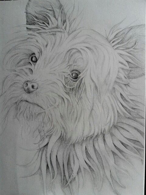 pencil dog sketch
