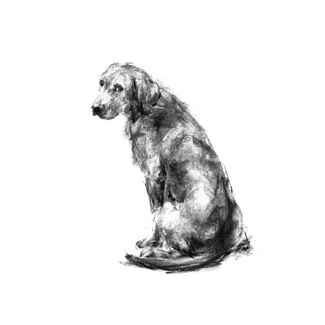 labrador sitting sketch print