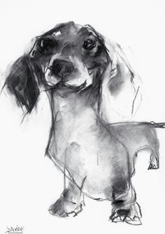 valerie davide dachshund sketch in charcoal
