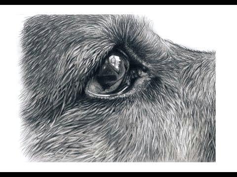 how to draw german shepherd eyes youtube