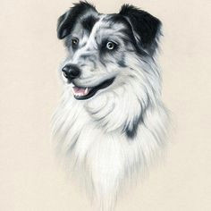 browse through images in heather mitchell s dogs drawn in colored pencil collection custom drawings of