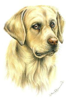 dogs golden labrador irina garmashova animal drawings pencil drawings art drawings dog paintings