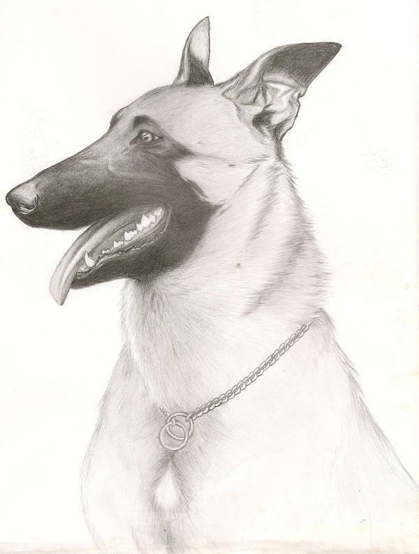 Drawing Dog Malinois Belgian Malinois by Lizzieod On Deviantart