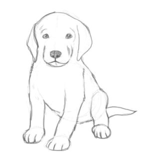 pics for easy drawings of cute dogs