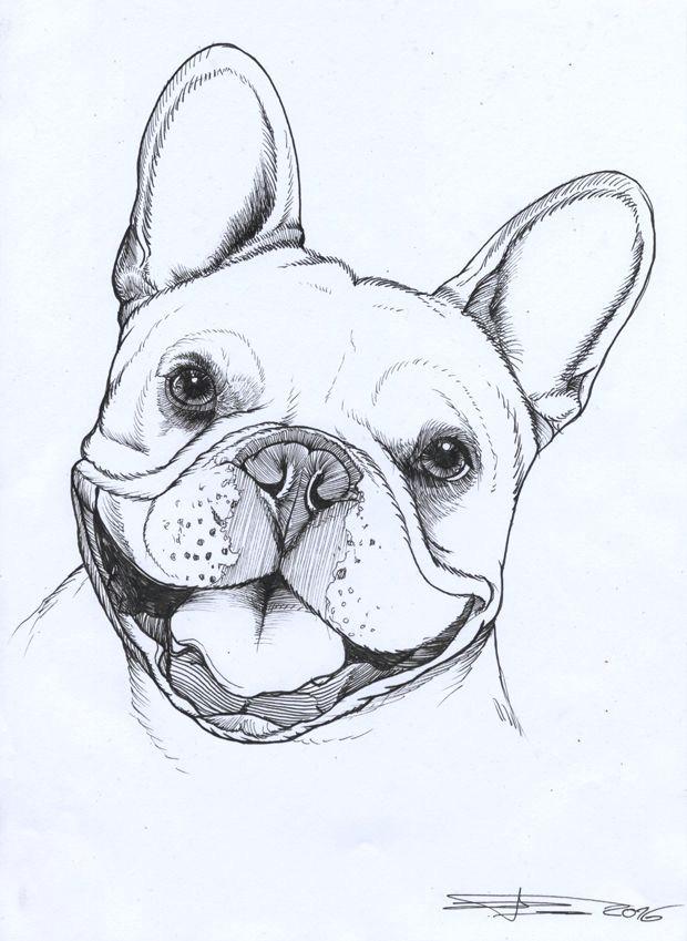 frenchie french bulldog pet portrait dog portrait teunen french bulldog drawing