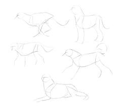 how to draw dogs monika zagrobelna dog anatomy animal anatomy how to draw