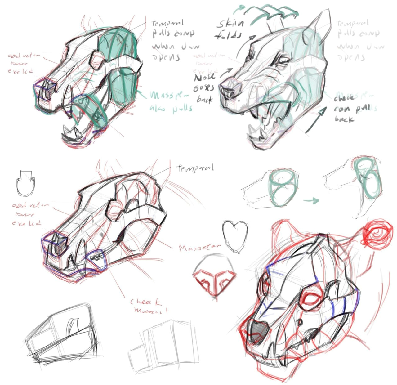 back to dog anatomy drawing