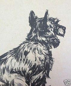diana thorne scotch terrier 1940 dog print lithograph book plate art australian terrier dog drawings