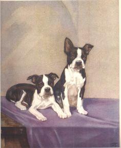 dog art print diana thorne vintage color plate 1932 8 x 10 dog chart vintage