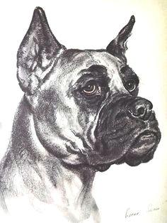 dog art dogs diana thorne dog print boxer dog art print dog lover gift dog portrait dog drawing vintage wall art dog wall art dog wall decor