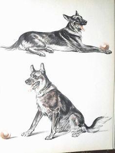 german shepherd dog art print by diana thorne dog decor for dog lover gift police dog illustration
