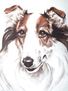 dog portrait dog lover gift dogs diana thorne collie dog art print dog print dog drawing