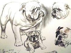 dog art dogs diana thorne dog print english bulldog dog art print dog lover gift dog portrait dog drawing vintage wall art dog wall art