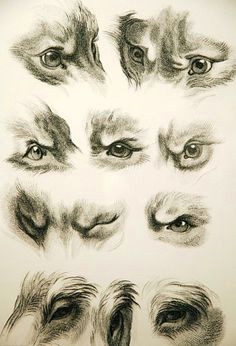 Drawing Dogs Eyes In Pastel 128 Best Favorite Drawings Images Color Pencil Art Crayons
