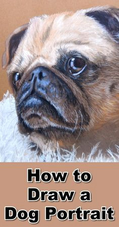 how to draw a pug portrait in pastel