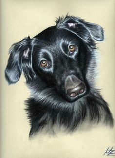 nicole zeug fineartamerica com pencil drawings of animals drawing animals pastel drawing