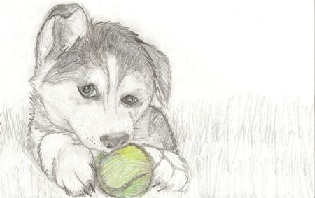 how to draw puppy drawing love to draw dogs so i drew a husky puppy with a tennis ball tennishowtoplay