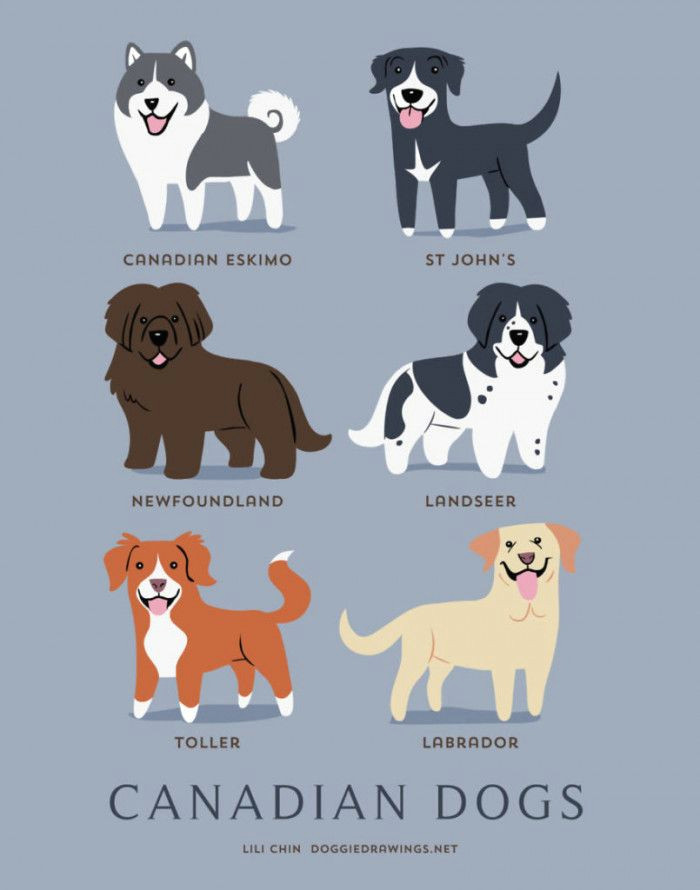 if you re obsessed with dogs then you will absolutely love this guide to the dogs of the world