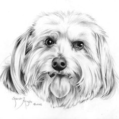 how to draw a dog s tongue how to draw pets drawing dogs online art course