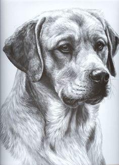 pencil drawing animal pencil drawings dog pencil drawing dog drawings graphite