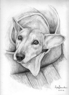 lana cane ritratto dog art pencil drawings dog sketches watercolor dogs