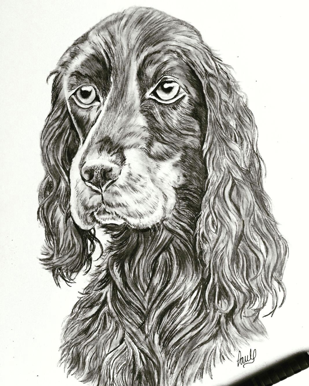 dog sketch done in pencil