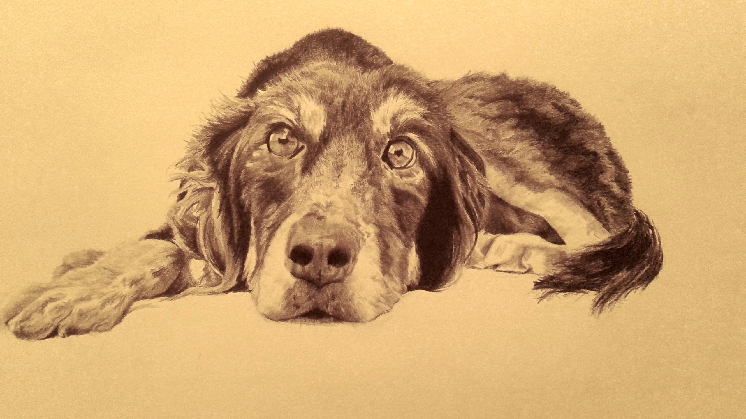 drawing of my friend s dog graphite art pencil drawings