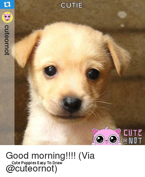 Drawing Dogs Photo Cute Puppies Easy to Draw Wallpaper Dog sophisticated Features Dog