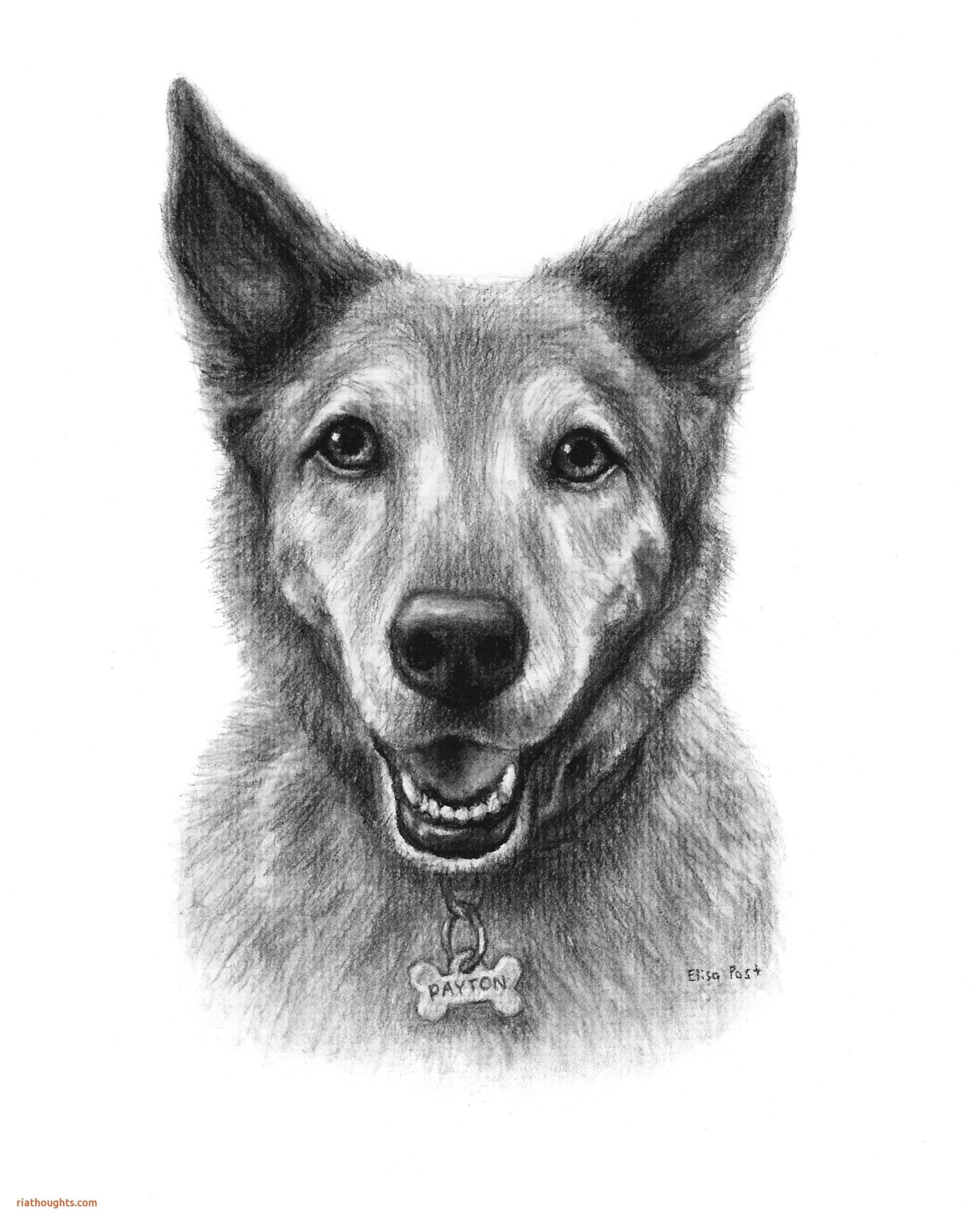 no noise dog tag inspirational beautiful dog fantastic dog drawing 0d coloring tag 2391 of no