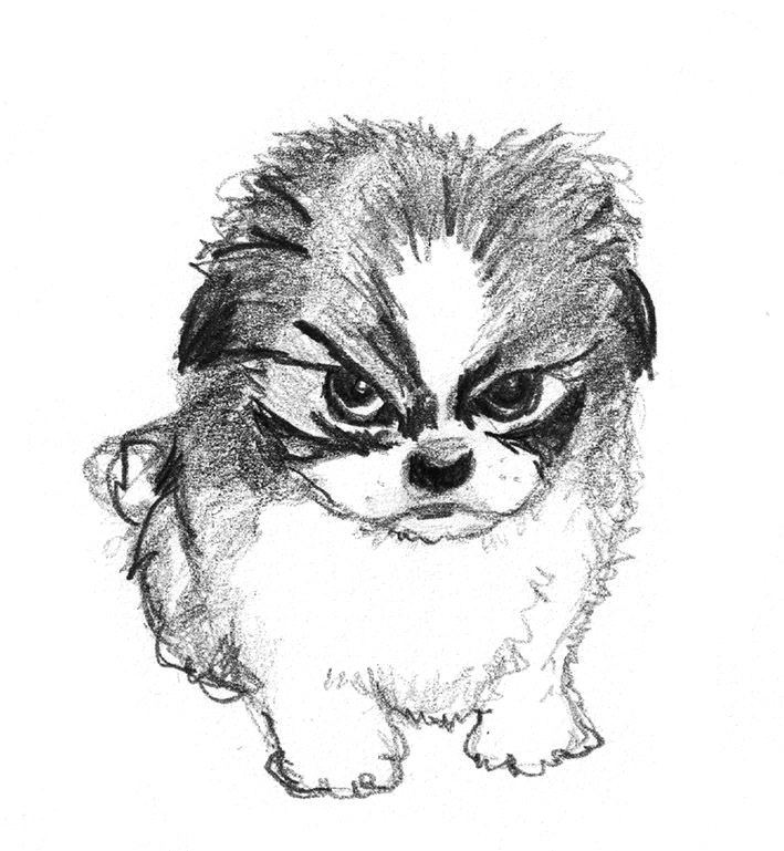dog sketches funny dogs pencil drawings charcoal drawing ideas doodles