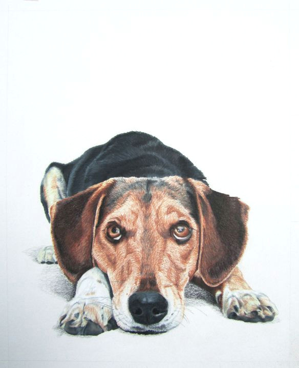 Drawing Dogs with Colored Pencils Colored Pencil Drawing by Lauren Heimbaugh Colored Pencil Drawings