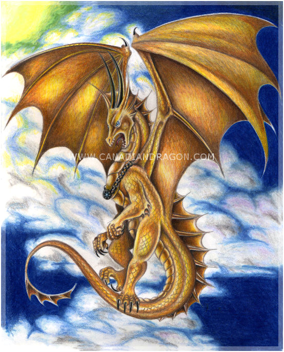 dragon drawings in color www pixshark com images