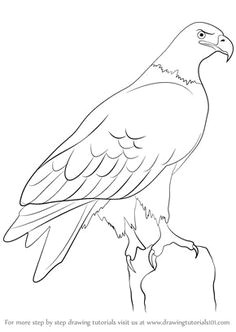 with this easy pictorial about how to draw a eagle it is only minutes that you take to draw
