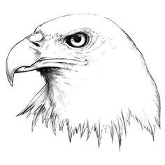 eagle head tattoo tribal eagle tattoo head tattoos eagle tattoos tatoos