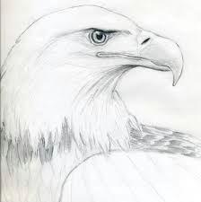 image result for eagle head outline eagle sketch bird sketch bird drawings easy