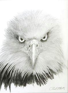 eagle eye by rodney stickney
