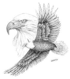 eagle eagle sketch bird sketch bird drawings animal drawings pencil drawings