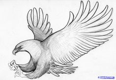 how to sketch an eagle in pencil draw an eagle bird step 8