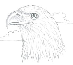 feather drawing feather art eagle drawing easy tattoo drawings cute drawings pencil drawings drawing ideas drawing tips eagle sketch