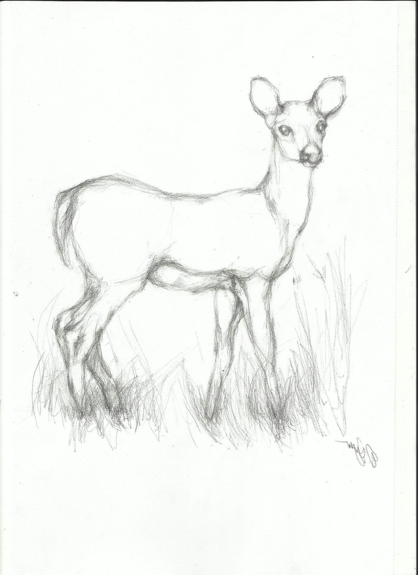 pencil easy animal sketch drawing