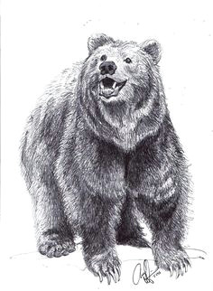 drawing a bear standing grizzly bear drawings realistic how to draw bears step